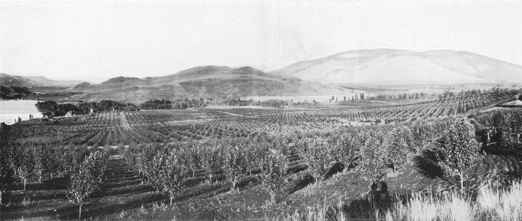 Photo en noir et blanc représentant un grand verger, une vue du lac et des collines au loin.
