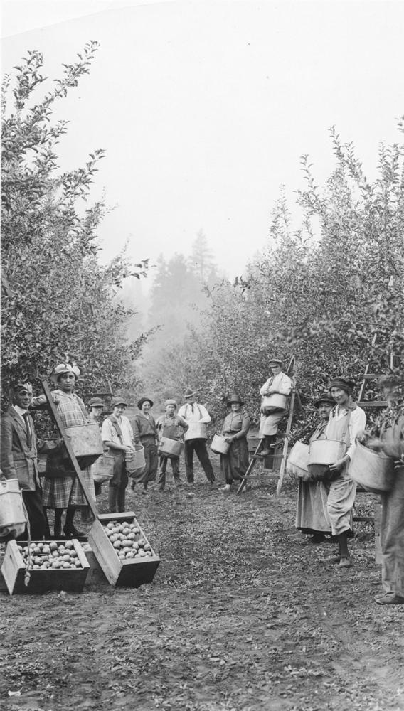 Photo en noir et blanc de douze hommes et femmes dans un verger avec des caisses de pommes et des sacs de ramassage.