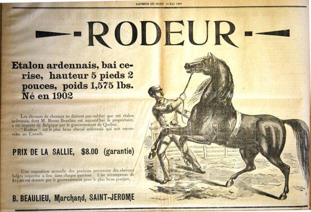 Image d'une annonce parue dans le journal L'Avenir du Nord du 10 mai 1906. L'annonce propose les services d'accouplement de Rodeur l'étalon ardennais importé de Belgique par le gouvernement du Québec. À la droite du texte, on présente la gravure d'un étalon fougueux et d'un homme qui tente de le contrôler à l'aide d'une bride.