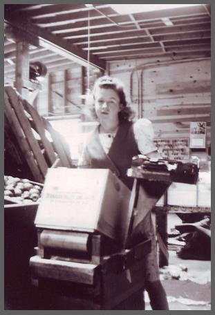 Photo en noir et blanc d'une jeune femme debout derrière une caisse de bois inclinée. Elle est à l'intérieur d'un édifice avec une benne de pommes à sa droite.