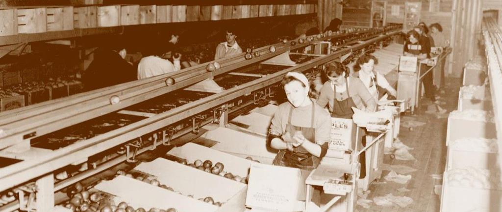 Photo sépia représentant des femmes travaillant dans un vieil édifice. Elles trient des pommes, les enveloppent et les mettent en caisse.