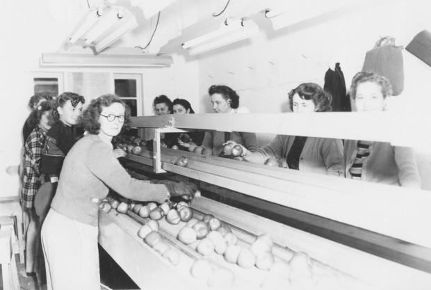 Photo en noir et blanc de neuf jeunes femmes travaillant à l'intérieur d'un édifice. Quatre d'entre elles se trouvent d'un côté du tapis roulant central sur lequel défilent des pommes et cinq sont de l'autre côté. La plupart d'entre elles regardent le photographe et sourient.
