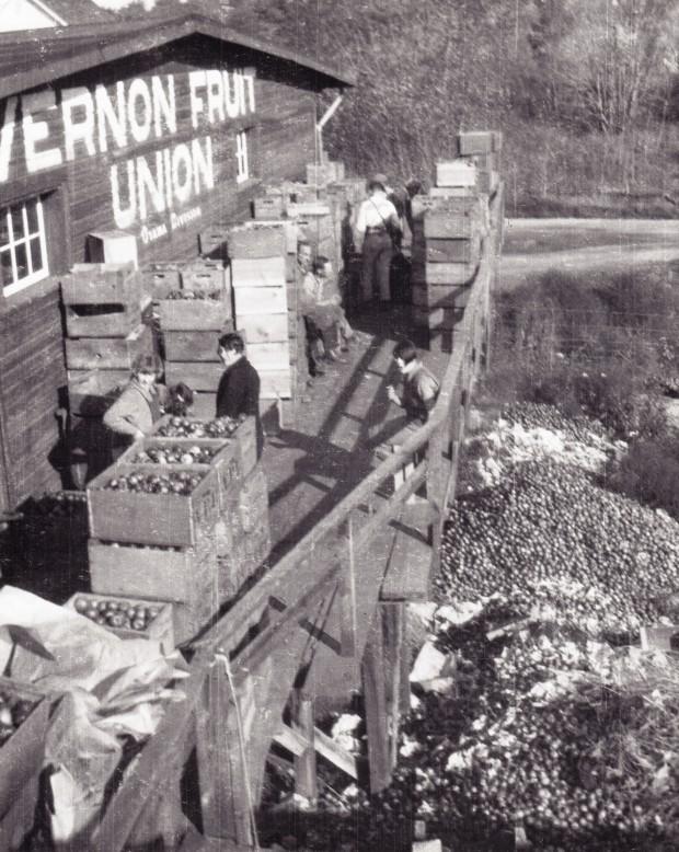 Photo en noir et blanc d'un édifice de bois sur le côté duquel les mots : « Vernon Fruit Union II, Oyama Division » sont peints. Neuf hommes et femmes se tiennent sur une terrasse surélevée au milieu de nombreuses caisses de pommes. Sous la terrasse, des milliers de pommes sont empilées à terre.
