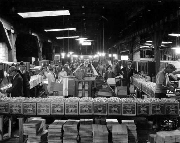 Photo en noir et blanc d'une vingtaine d'hommes et de femmes travaillant à l'intérieur d'un vieil édifice. Au premier plan se trouve une rangée surélevée de caisses de pommes portant l'étiquette de la marque OK. Des planches de bois sont empilées au-dessous. Des hommes examinent les pommes dans les caisses ou regardent le photographe. Au centre, des femmes conditionnent des pommes le long de deux tapis roulant centraux. À droite, un homme est en train de monter une caisse.