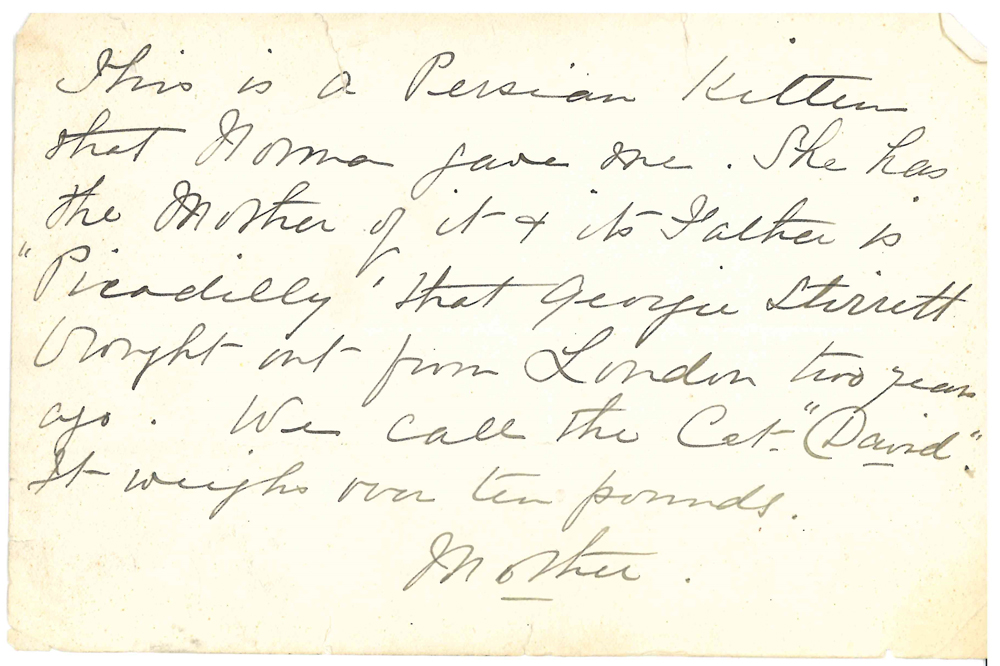 Écrit à la main au verso d'une photo de chat indiquant son nom « David » et son poids de 10 livres