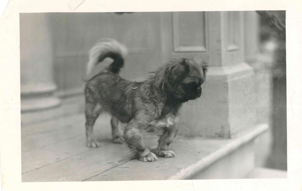 Photo d'un chien sur les marches de la Mission