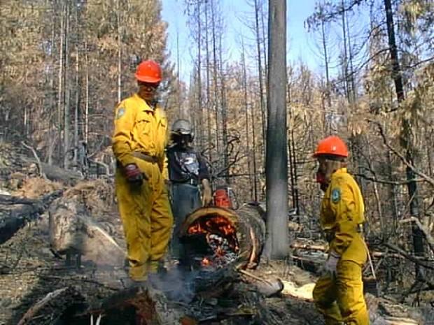 Homme debout près d'un arbre coupé en feu.
