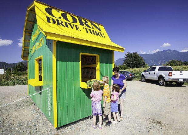 Photo en couleur d'une femme et de trois enfants qui attendent pour acheter du maïs au comptoir d'un kiosque.