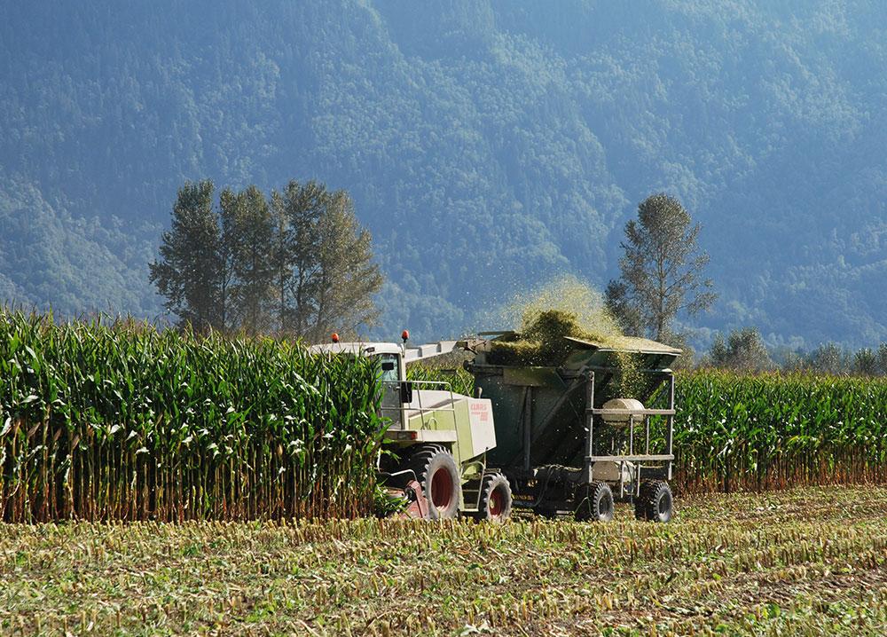 Photo en couleur d'un tracteur récoltant du maïs et des montagnes en arrière-plan. L'ensilage est projeté dans un wagon derrière le tracteur.