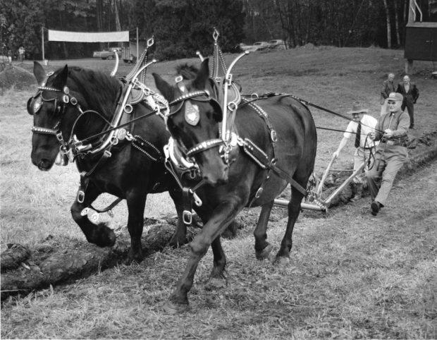 Photo en noir et blanc de deux hommes en train de labourer un champ avec un attelage de chevaux.