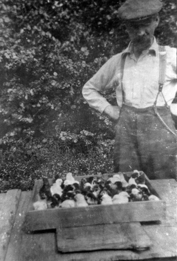 Photo en noir et blanc d'un homme debout devant une caisse de poussins.