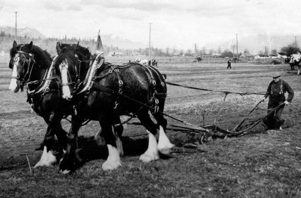 Photo en noir et blanc d'un attelage de chevaux en train de labourer lors d'un match.