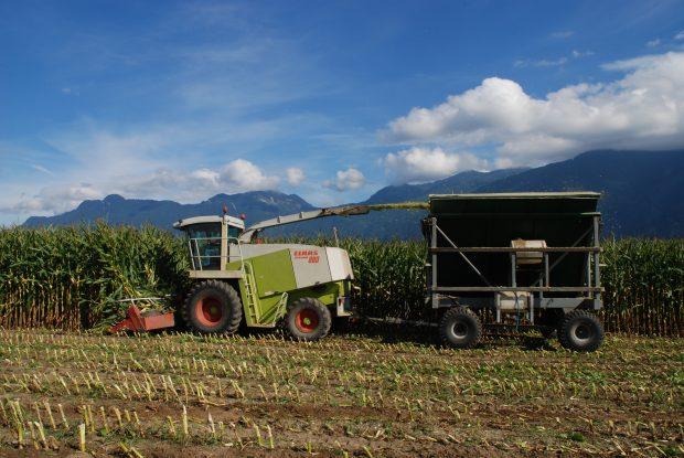 Photo en couleur d'un tracteur récoltant du maïs et de montagnes en arrière-plan. L'ensilage est projeté dans un wagon derrière le tracteur.