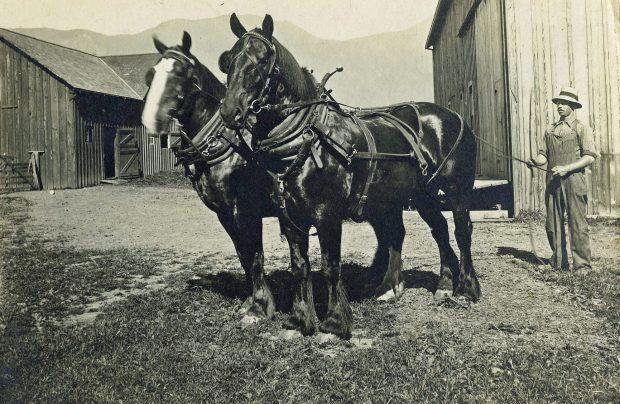Photo en noir et blanc d'un homme avec un attelage de chevaux de trait devant des granges.