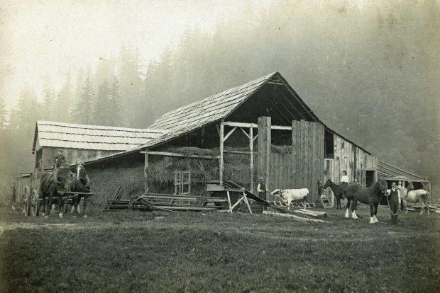 Photo en noir et blanc de chevaux de trait et de vaches devant une grange remplie de foin.
