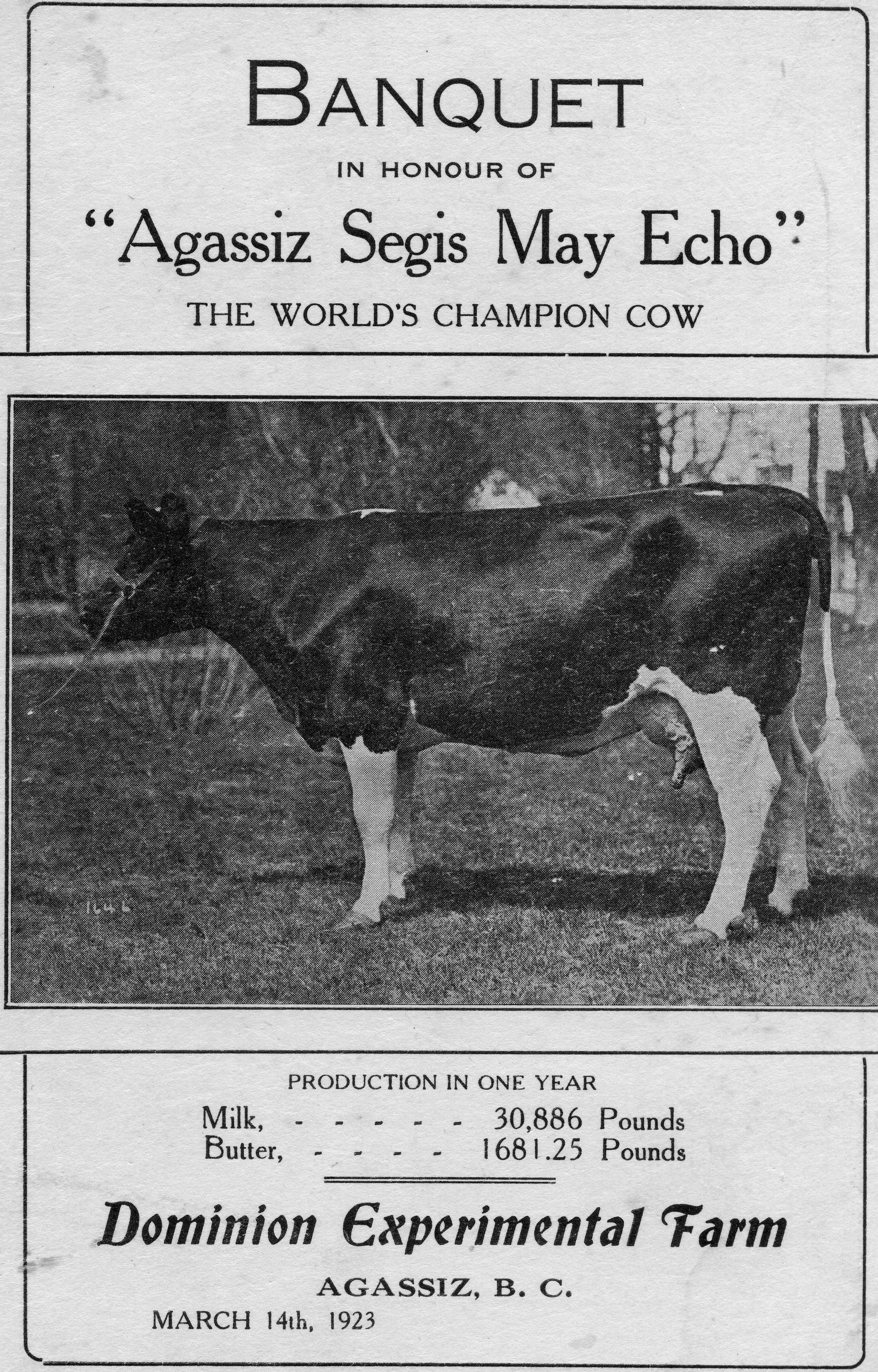 Image en noir et blanc du programme du banquet en l'honneur d'Agassiz Segis May Echo. Comprend une photo de la vache championne, 1923.