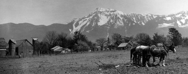 Photo en noir et blanc d'un attelage de chevaux de trait dans un champ avec des bâtiments agricoles et une montagne en arrière-plan.