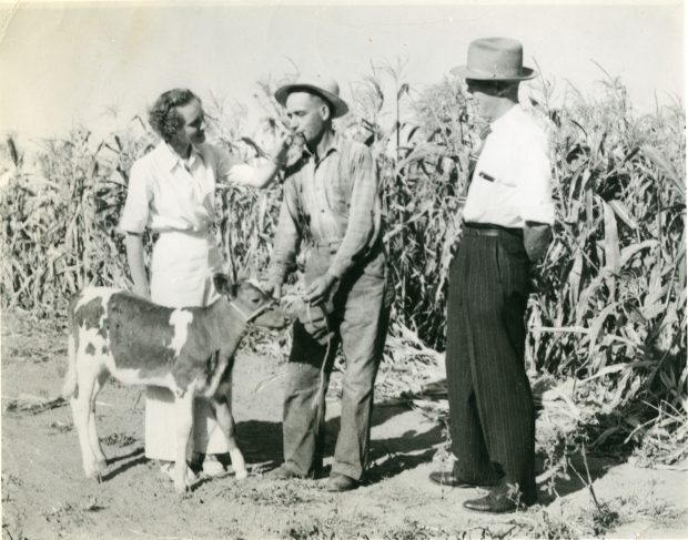 Photo en noir et blanc d'une femme et de deux hommes debout dans un champ de maïs avec un veau. La femme est habillée en blanc tandis que les hommes sont vêtus de chemises et de pantalons et portent des chapeaux.