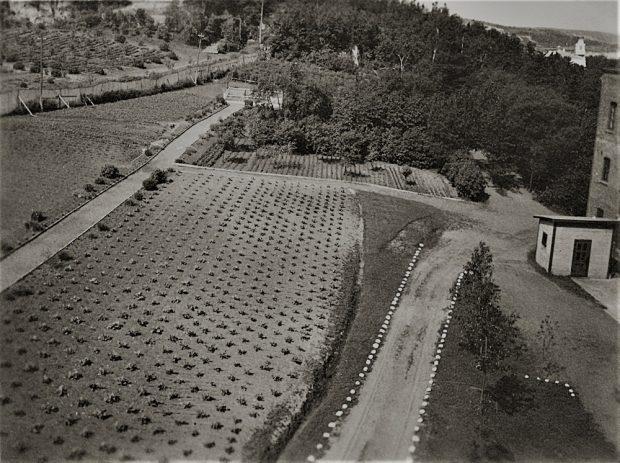 Photo en noir et blanc d'un jardin près d'un bâtiment.