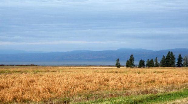 Paysage de campagne à l'automne près du fleuve; champs dorés, bosquet de sapins et d'épinettes, fleuve et montagnes sous un ciel légèrement ombragé.