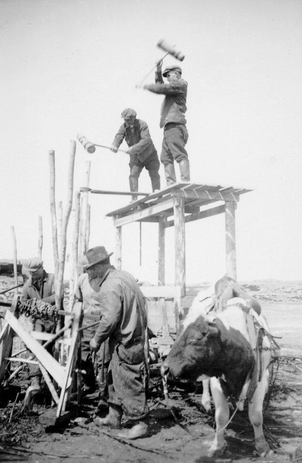 Sur la rive du fleuve, deux hommes debout sur un échafaudage de bois tiré par un bœuf plantent dans le sol des poteaux à l'aide d'une masse. Au premier plan, trois autres travailleurs préparent des chaînes.