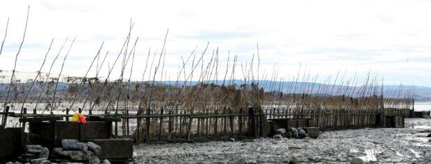 Une pêche à anguilles traverse la photo de gauche à droite. On voit quatre gros coffres en bois complètement à sec. Dans le premier à droite on aperçoit le bras appuyé et la main d'un homme entièrement penché à l'intérieur du coffre. En arrière-plan, il y a les montagnes de la rive sud.