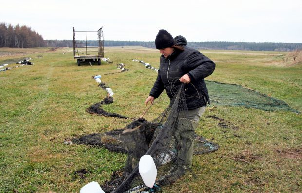Une femme déploie un filet de pêche dans un champ. D'autres filets sont étendus au sol et une remorque à foin vide est au centre de l'image. Il y a une forêt en arrière-plan.