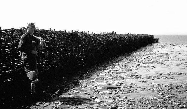 Au premier plan, un jeune homme en tenue de travail est debout dos à une longe pêche à fascines (soit une barrière mesurant 1,80 m de haut et faite avec des petites branches tressées). Il tient une pelle de la main gauche et regarde le photographe; photo noir et blanc.