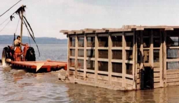 Une immense cage rectangulaire ayant une structure de bois et recouverte de treillis métalliques est transportée sur la rive du fleuve dans une remorque tirée par un tracteur.