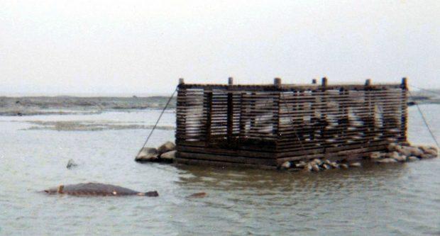 Coffre en bois fait de planches étroites horizontales. Il mesure 2,4 m x 4,8 m, sa hauteur est de 1,8 m. Il est fixé au fond marin par des câbles. Il est solidifié par des pierres à sa base.