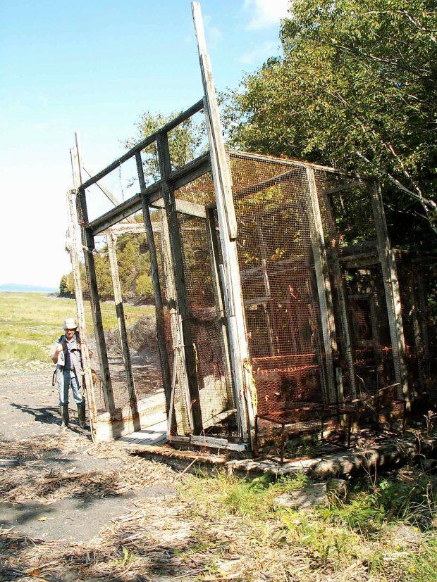 Cage en treillis métallique dont la structure est de planches. Elle mesure environ 6 mètres par 5 mètres et est échouée dans une baie bordée d'arbres, un homme est debout à gauche, c'est l'été.