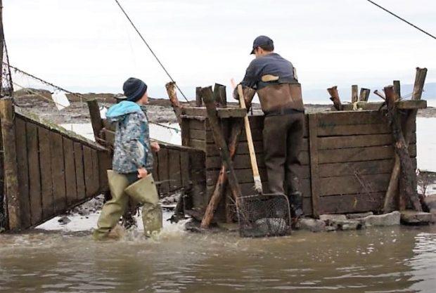 Un homme porte des bottes-pantalon et un enfant des bottes de pêcheur. L'homme s'apprête à ouvrir un coffre en bois dans lequel sont gardées captives les anguilles de la pêche; l'enfant s'en approche.