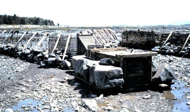 Sur la rive du fleuve à marée basse, une longue rangée de panneaux ajoutés, certains sont recouverts debranchages et forment une barrière. Les panneaux sont tenus en place par de grosses roches à leur base.