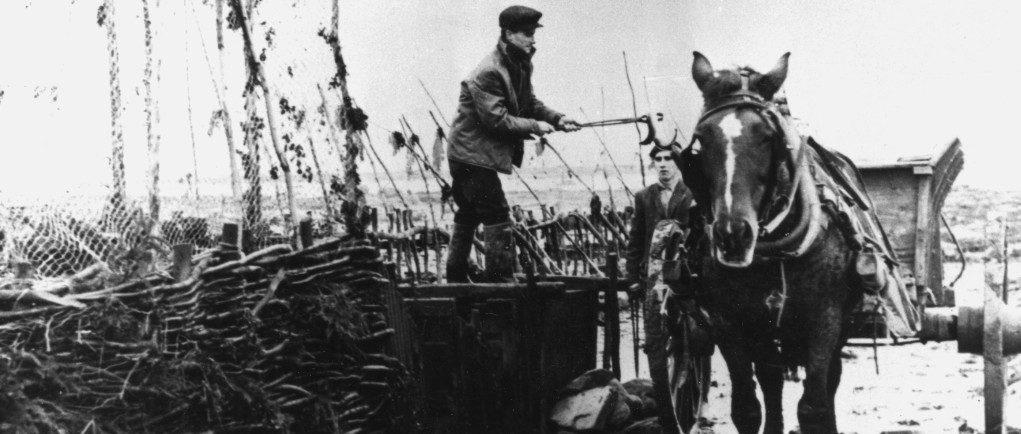 Le long d'une pêche à anguilles, un homme debout sur un gros coffre de bois manipule une pince à longs manches avec laquelle il tient une anguille au-dessus d'une remorque attelée à un cheval; photo noir et blanc.