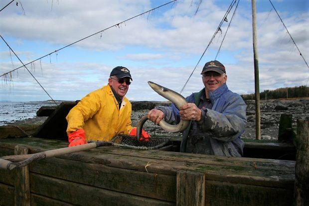 Deux hommes rieurs sont debout dans un grand coffre en bois servant à garder les anguilles captives dans la pêche. L'un d'eux tient une anguille à mains nues et l'autre le regarde.