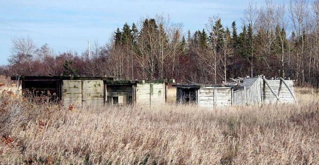 Trois gros coffres en bois, ainsi que deux entonnoirs aussi en bois déposés dans un champ à l'automne, en bordure d'un boisé.