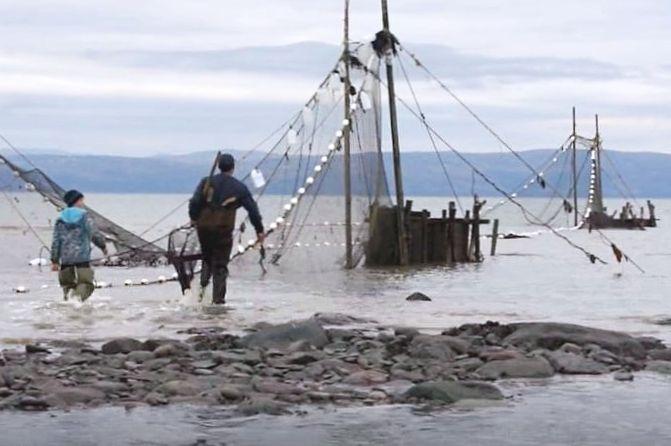 Un pêcheur et un jeune garçon se dirigent vers les gros coffres en bois d'une pêche à anguilles. Ils portent des bottes-culottes. Ils ont de l'eau jusqu'aux genoux.