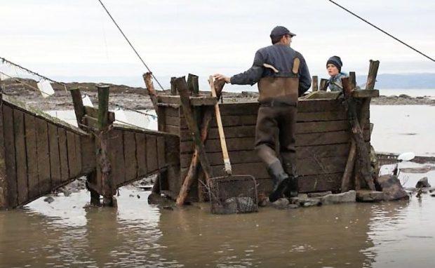 Sur la rive du fleuve, un pêcheur et un jeune garçon s'apprêtent à ouvrir un coffre en bois dans lequel des anguilles sont captives. On voit deux entonnoirs de bois placés bout à bout reliés au coffre et guidant les anguilles dans celui-ci.