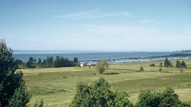 Photographie couleur de champs agricoles le long du fleuve St-Laurent (à Rivière- du-Loup), bordés d'une rangée d'arbres près desquels on aperçoit deux bâtiments en bois en arrière-plan.
