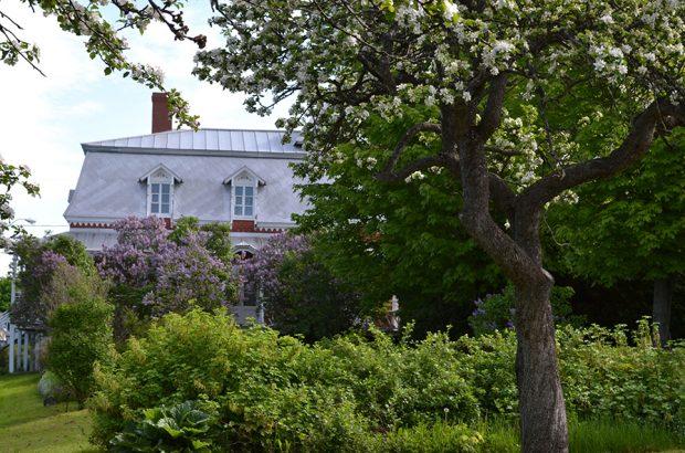 Photo couleur. De nombreux lilas et arbres fruitiers sont en fleurs. Une maison de briques est à l'arrière-plan.