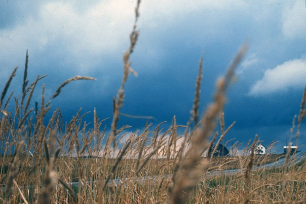 Photo couleur d'un champ de blé traversé par une route avec trois bâtiments en arrière-plan.
